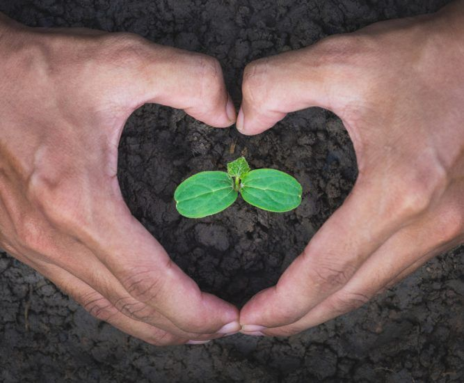 Farmer's hand with protective gesture in the form of heart to protect the seedlings. Earth day, love nature concept